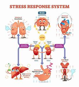 Stress Response System Vector Illustration Diagram  Nerve