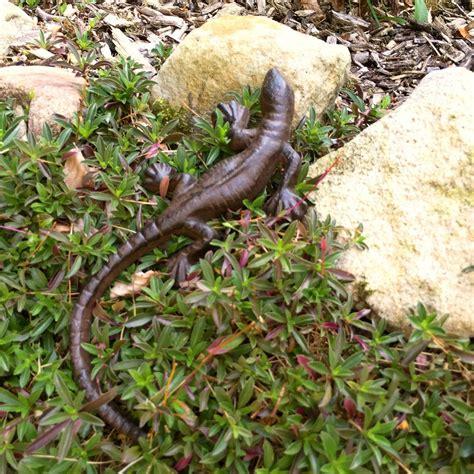 Garten Deko Gecko by Phantastische Eidechse In Tollsten Farben Wie Ein