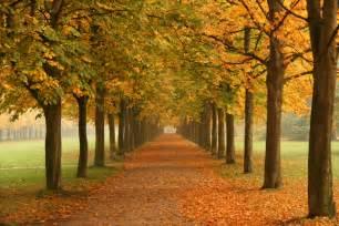 file autumn trees in dresden jpg wikimedia commons
