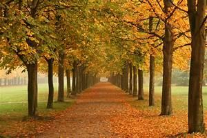 File:Autumn trees in Dresden.jpg