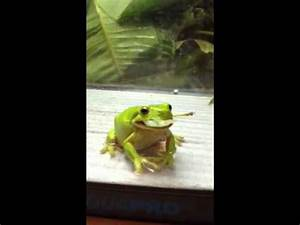 Frog eating grasshopper - YouTube