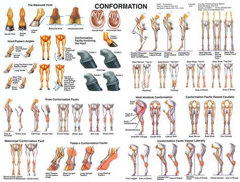 conformation chart wwwhoofprintscom