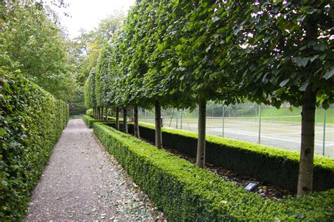 garden trees chch town g on pinterest hedges pergolas and gardens