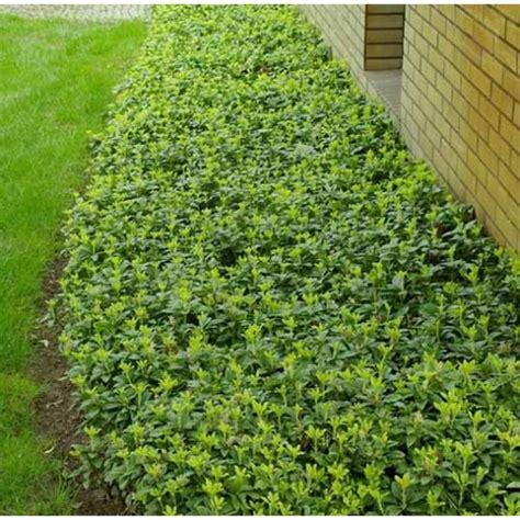 maintenance plants  require  gardening