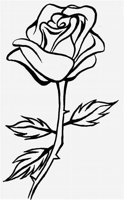 Rose Flower Coloring Pages Pdf Clipart Summer