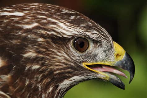 treknature sick bird photo