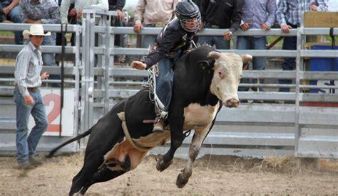 rodeos animal cruelty  pc  mad stuffconz