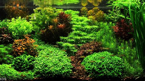 What Is Aquascaping by Aquascape