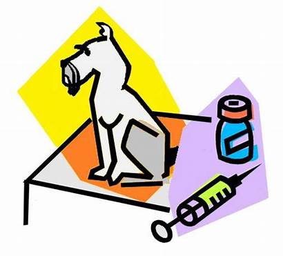 Vaccines Dog Vaccine Clipart Animal Hospital Schnauzers