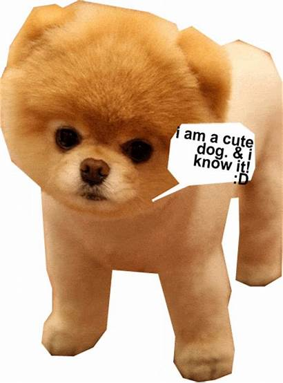 Puppies Dog Puppy Boo Dogs Cutest Background