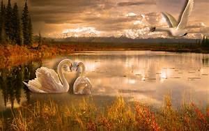 Swan, Lake, Romance, Desktop, Wallpaper, Hd, 3840x2400