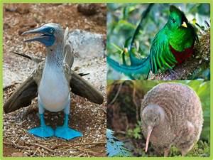 Las aves más raras del planeta Todo mascotas