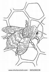 Honeycomb Coloring Bee Zentangle Doodle Honeybee Printable Honey Detailed Colouring Abstract Getcolorings Themes Adult Pat sketch template