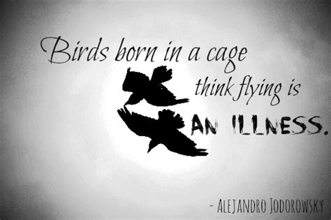 bird flying quotes quotesgram