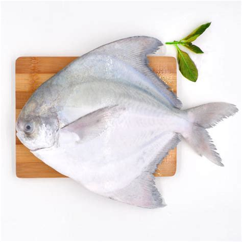 frozen pomfret fish packaging type carton rs