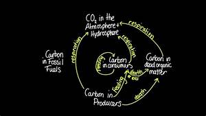 4 3 Skill  Construct A Diagram Of The Carbon Cycle