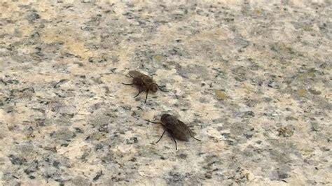 So Fliegen Fliegen Nicht Ins Haus  Frag Mutti
