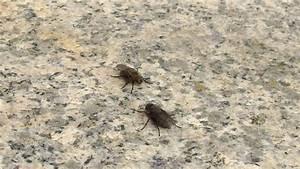 Mücken Im Zimmer Loswerden : so fliegen fliegen nicht ins haus frag mutti ~ Lizthompson.info Haus und Dekorationen