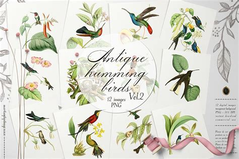 vintage humming birds vol ephemera transparent png
