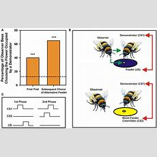 Frontiers  Social Learning In Insects A Higherorder Capacity?  Frontiers In Behavioral