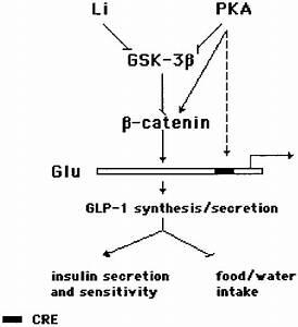A Diagram Showing Mechanisms For The Regulation Of Proglucagon Gene