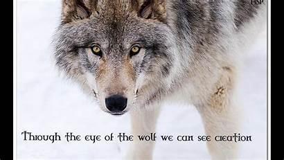 Wolf Badass Wolves Quotes Motivational Animal Wisdom