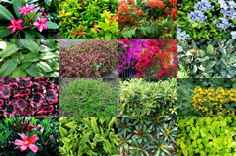 garden plants  trees scientific names scientific
