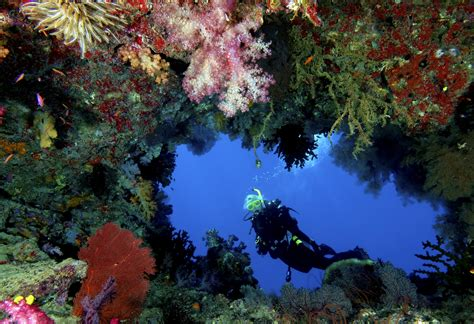 Fiji's Rainbow Reef | Scuba Diving Vacations in Asia, Pacific and Africa