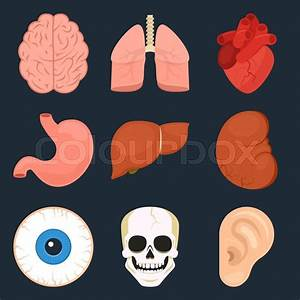 Flat Icon Set Of The Human Organs  Vector Illustration In