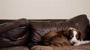 these are the best and worst couch fabrics for pet owners With best sofa for dog owners