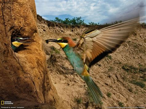 National Geographic Animal Hd Wallpapers - national geographic wallpapers hd wallpaper cave