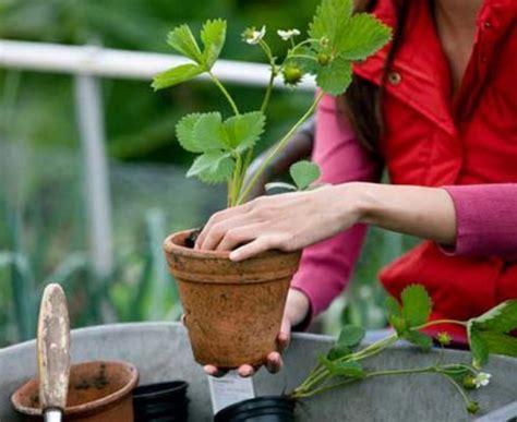 harga tanaman buah pot tabulampot lengkap