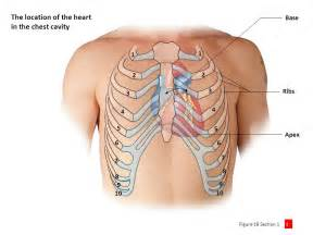 pericardial sac transportation ppt download