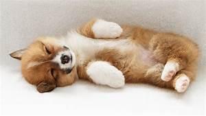 Download Wallpaper 1600x900 Puppy sleeping HD Background