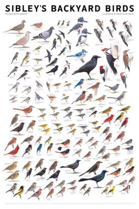 sibley s backyard birds eastern north america 0982510209