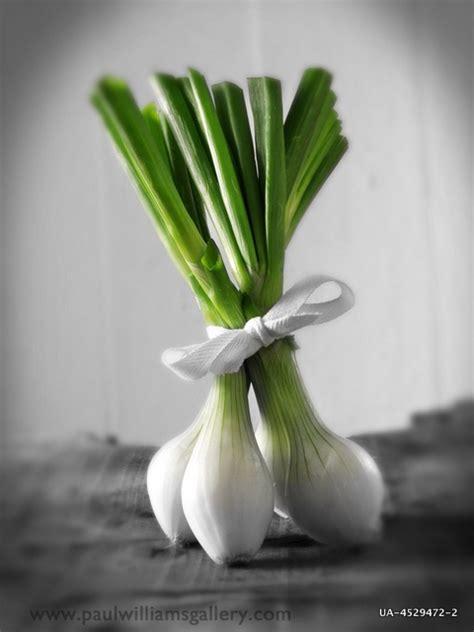 pin de nadine beattie en food photography en