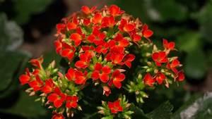 Wann Heidelbeeren Pflanzen : die pflanzen wissen wann es fr hling wird ~ Orissabook.com Haus und Dekorationen