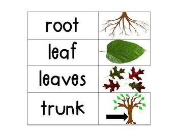 kindergarten science vocab plants flower kindergarten