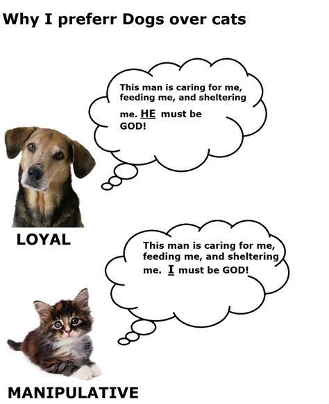 cats funny dogs vs difference between cat why dog hate evil prefer really pic quotes better than today true cute