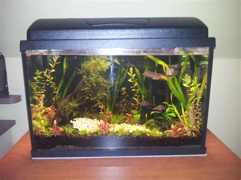 aquarium de 20 litres betta splendens