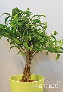 Pflanzen Für Raucher : pflanzen im schlafzimmer 9 luftreiniger helfen beim schlafen ~ Markanthonyermac.com Haus und Dekorationen