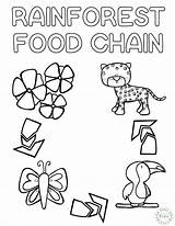 Coloring Rainforest Chain Printable Craft Play 7th Sketchite Credit Larger Learn Colors sketch template