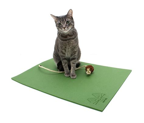 scaredy cat scaredy cat sitting on the doormat cat bed cat mat cat olive green catnip by