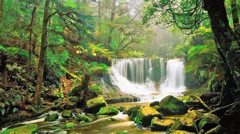 5 five 5: Gondwana Rainforests of Australia (Australia)