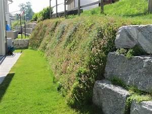 Hang Bepflanzen Bodendecker : rollrasen m ller dachbegr nung ~ Lizthompson.info Haus und Dekorationen