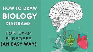 How To Draw Biology Diagrams In An Easy Way
