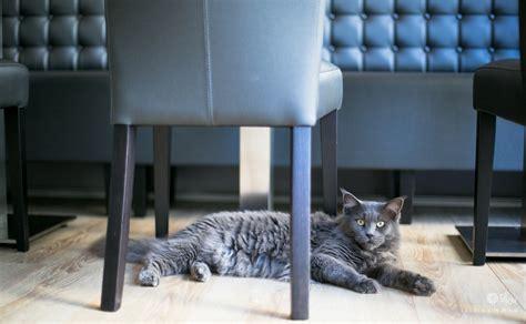 la maison d elise neko caf 233 bar 224 chats bar 224 chats 224 nantes
