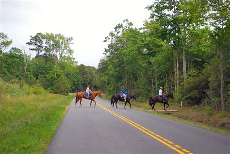 Eastern Shore Va Trail Rides « Life And Real Estate On The