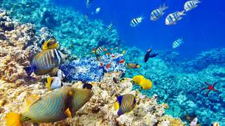 Wallpaper Hd Quality Underwater World Ocean Coral Reef Tropical Fishes      Coral Reef Wallpaper 1920x1080