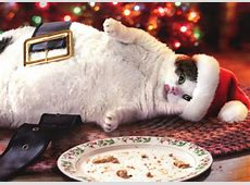 Santa Cat With Cookies Box of 10 Funny Christmas Cards by